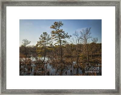 Framed Print featuring the photograph Virginia Swamp by Jim Moore