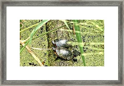 Framed Print featuring the photograph Virginia Swamp Turtles by Rob Green