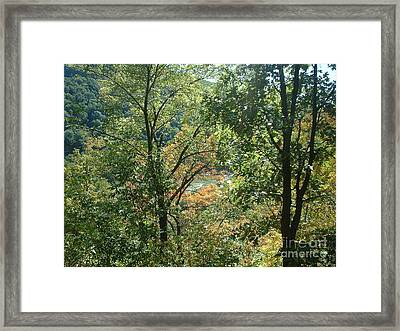 Virginia Walk In The Woods Framed Print