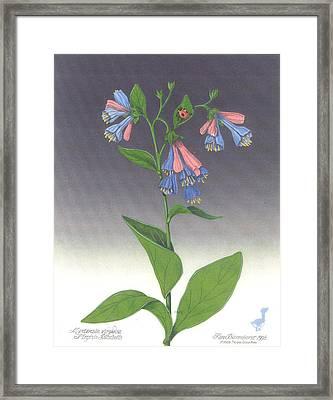 Viriginia Bluebells Framed Print