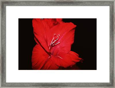 Vision Of Red Framed Print by Cathie Tyler