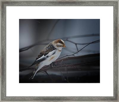 Visiter From The North Country Framed Print