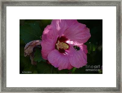 Framed Print featuring the photograph Visiting Bee by Tannis  Baldwin