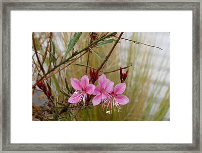 Visiting The Pink Guara Framed Print by Bonnie Muir