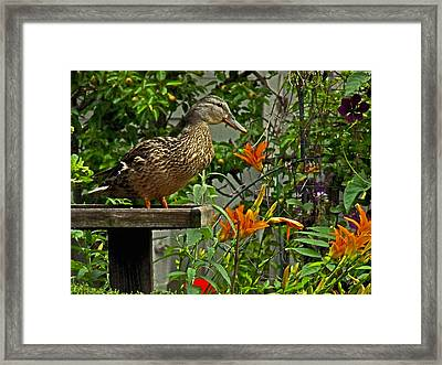 Framed Print featuring the photograph Visitor To The Feeder by William Fields