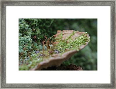 Vital Passage Framed Print by Sean Green