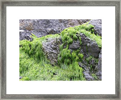 Framed Print featuring the photograph Vitality by Tina Marie