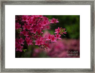 Vivid Group Framed Print by Mike Reid