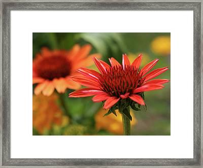 Vivid Summer Framed Print