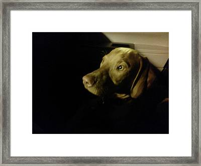 Vizsla In The Shadows Framed Print by Brittany Roth