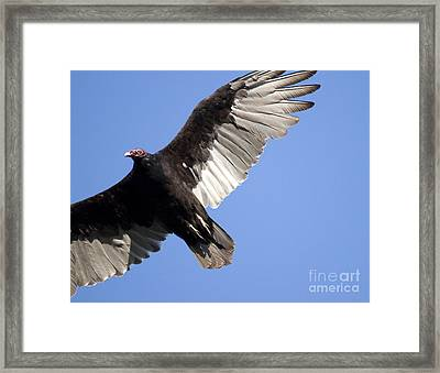 Framed Print featuring the photograph Vulture by Jeannette Hunt