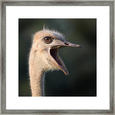 W H A T  Framed Print by Joseph G Holland