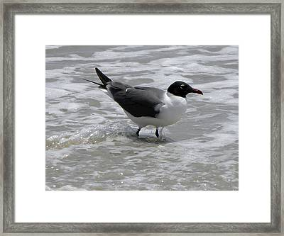 Wading Framed Print by Sandi OReilly