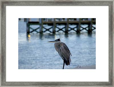 Framed Print featuring the photograph Waiting by Brian Wright