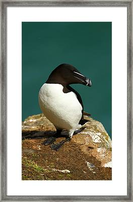 Waiting For Love II Framed Print by Jacqui Collett