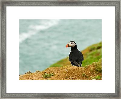 Waiting For Love Framed Print by Jacqui Collett