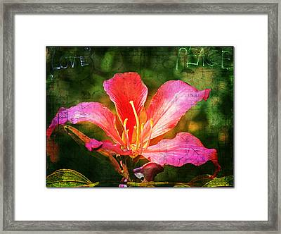 Waiting For My Orchid Tree To Bloom Framed Print
