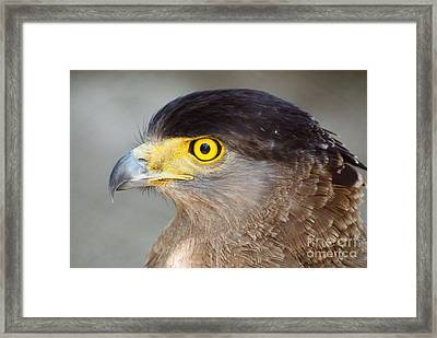 Framed Print featuring the photograph Waiting For Prey  by Fotosas Photography