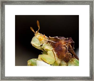 Waiting For The Catch Framed Print by Louis B