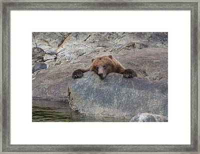 Waiting For The Salmon Framed Print by Tim Grams