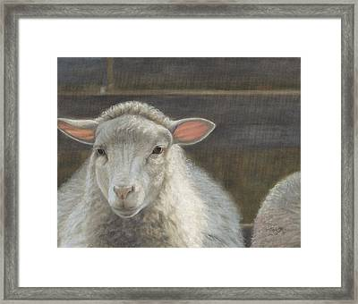 Waiting For The Shepherd Framed Print