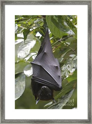 Framed Print featuring the photograph Waiting  by Gary Bridger
