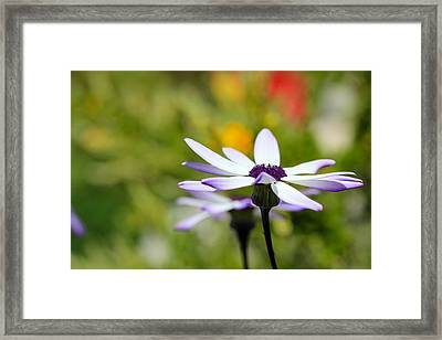 Waiting Framed Print by Heidi Smith