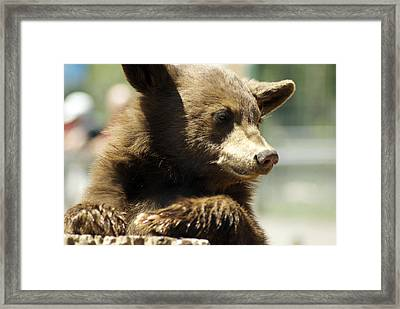 Waiting Framed Print by Jenny May