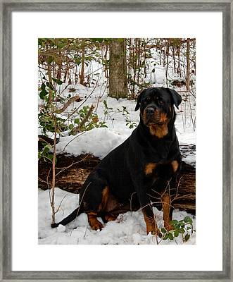 Waiting Framed Print by Karen Harrison
