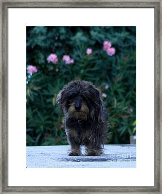 Framed Print featuring the photograph Waiting by Lainie Wrightson