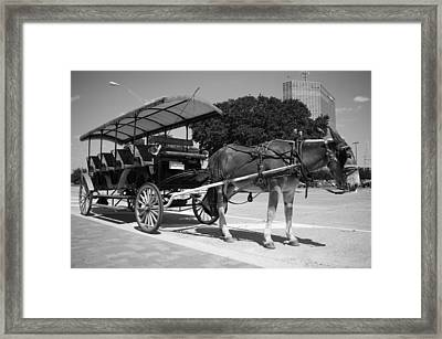 Waiting Mule Framed Print by Irvin Louque