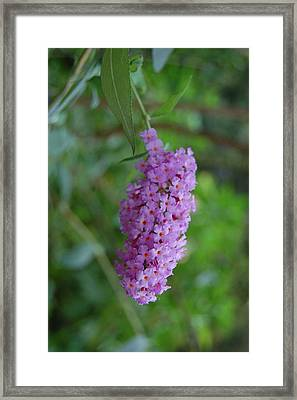 Waiting On Butterflies Framed Print by Beverly Hammond