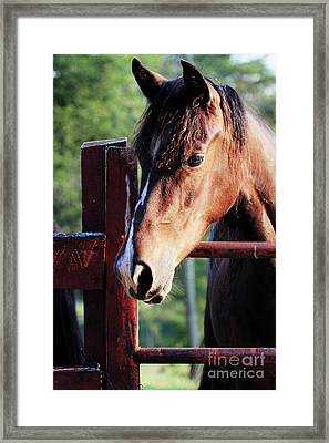 Waiting Framed Print by Stephanie Frey