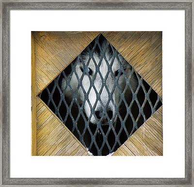 Waiting To Run Framed Print by FeVa  Fotos