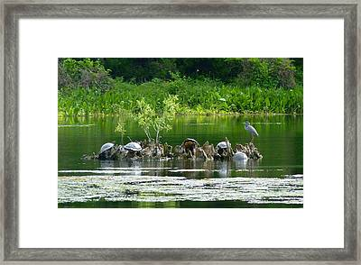 Wakulla Springs Wildlife Framed Print