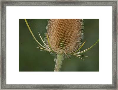 Framed Print featuring the photograph Wales by Tam Ryan