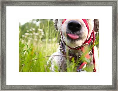 Walk Framed Print by Amanda St Germain