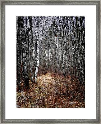 Framed Print featuring the photograph Walk In The Forest by Blair Wainman