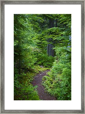 Framed Print featuring the photograph Walk In The Forest by Sylvia Hart