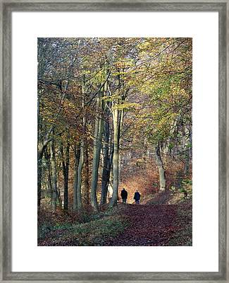 Walk In The Woods Framed Print by Nicola Butt