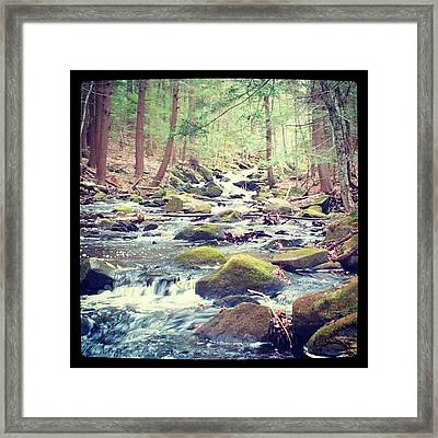 Walk In The Woods! #woods #woodland Framed Print