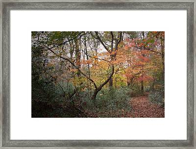 Walk Of Change Framed Print by David Troxel