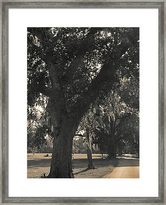 Framed Print featuring the photograph Walk Through The Oaks by Brian Wright