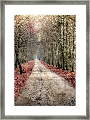 Walk Through Woods Framed Print
