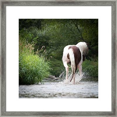 Walkaway Horse Framed Print