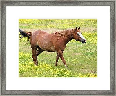 Walking Horse Framed Print