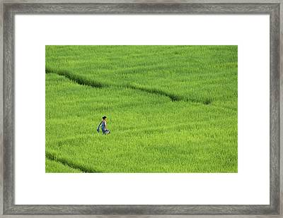 Walking In Green Rice Fields Near Mae Hong Son Framed Print by Austin Bush
