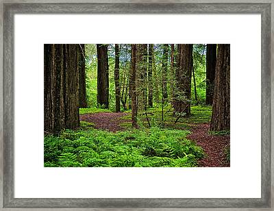 Walking Inward Framed Print