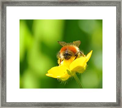 Framed Print featuring the photograph Walking On Sunshine by Ronda Broatch