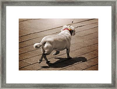 Walking The Dog Framed Print by Steven Michael